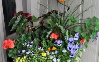 bonnie_flower_12_port_978x1472